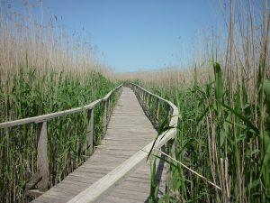 Tisza-tó stég